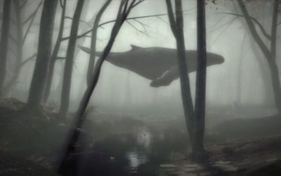 A Whale in the Forest